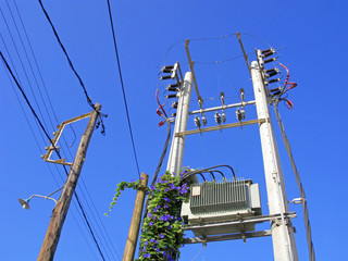 Electricity power line with transformer. Thick bindweed grows on one of electric pillars.