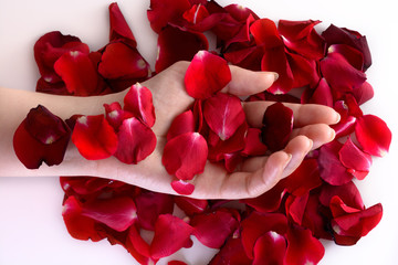 Woman hand among red petals