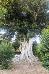 Sevilla (Andalucia, Spain): park