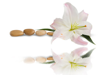 Spa.Lily flower and massage stones with water reflection isolated