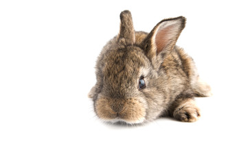 Cute little baby rabbit on white background, isolated