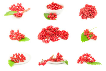 Collage of red berries cluster of guelder rose  over a white background