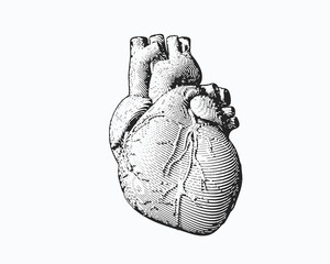 Monochrome engraving human heart illustration