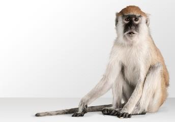 Fotobehang Aap Monkey.