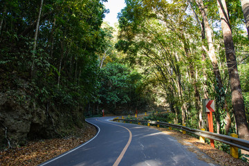 Road in Mahogany Forest on the Bohol island, Philippines