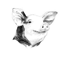head of spotted pig, sketch vector graphics black and white drawing