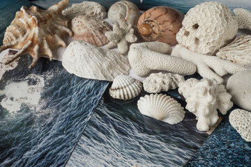 Shells and pictures with the image of the sea