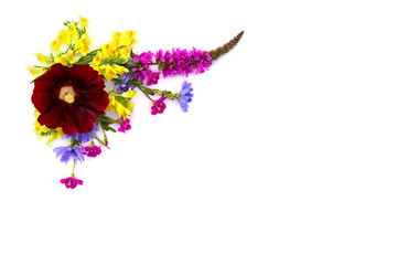 Frame of wildflowers: Malva (Alcea rugosa, Hollyhock), Lythrum salicaria, Epilobium, Linaria vulgaris (toadflax) and chicory on a white background with space for text. Top view, flat lay