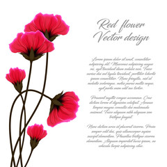 Vector red flower illustration isolated on white background. Poppies greeting card or invitation