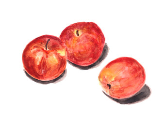 Watercolor hand drawn set of red apples isolated on white background. Organic products for the design of healthy food.
