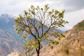 Spring tree in mountains