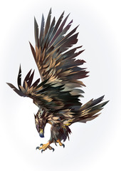 Wall Mural - Drawn isolated flying eagle on the side