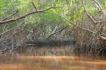 Mangrove forest in Ria Celestun, Mexico