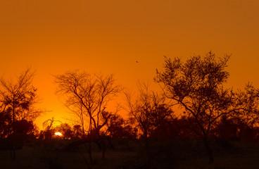 Simbambili Sunrise