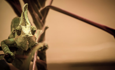 Lizard on Tree Branch