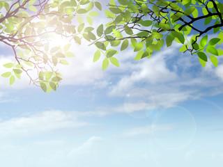 新緑 エコロジー 自然環境