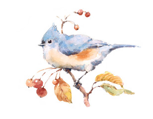 Watercolor Bird Titmouse on the Branch With Berries Hand Painted Illustration isolated on white background