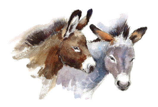 Watercolor Farm Animals Donkeys Couple Hand Drawn Illustration isolated on white background
