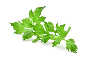 Celery leaf isolated on white background