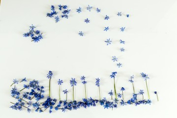 Blue flowers on a white background.