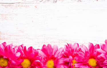 Gerbera flowers, spring background for women's day or card for mothers day