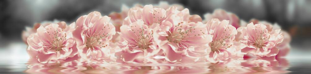 Sakura flower banner