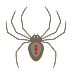 Vector flat style illustration of spider
