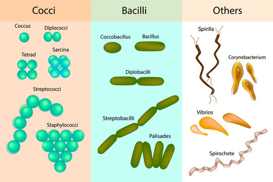 Types of bacterial. Bacteria,different Forms of Bacteria. Classification