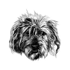 head shaggy dog funny, sketch vector graphics black and white drawing