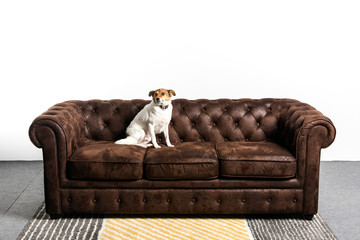 Perro encima de un sofa chester Wall mural