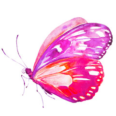 beautiful pink  butterfly, isolated  on a white,watercolor