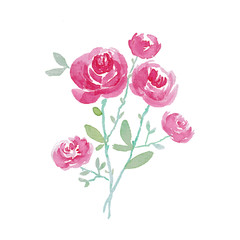 Watercolor illustration of rose flowers