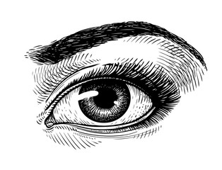 Hand-drawn beautiful female eye, sketch. Makeup, beauty salon symbol. Vintage vector illustration