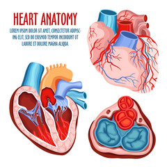 Heart structure, medical and anatomy poster