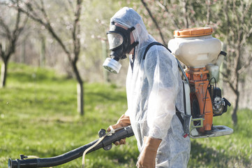Young farmer spraying apricot trees with chemicals in the orchard