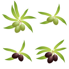 Olive branches. Vector set.