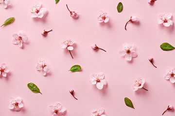 Flower blossom pattern on pink background. Top view