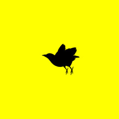 bird icon. isolated sign