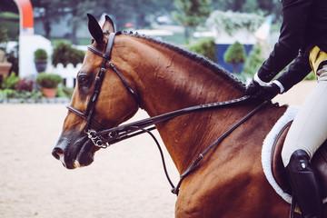 Horse Ride Hunter Jumper at Show