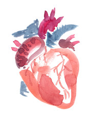 Abstract anatomical human heart painted in watercolor on clean white background