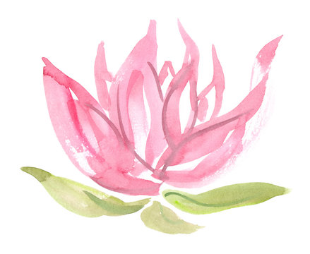 Abstract pastel pink lotus flower with green leaves painted in watercolor on clean white background