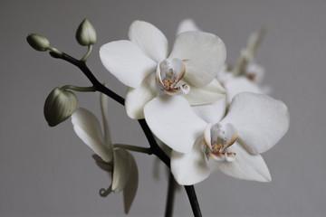 Tuinposter Orchidee Retro white orchids