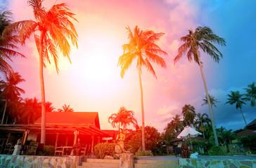 Retro photo of palm trees