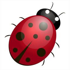 Ladybird, Ladybird illustration