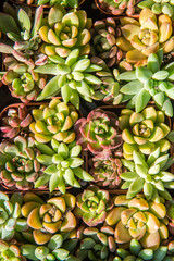 succulent plant in the garden