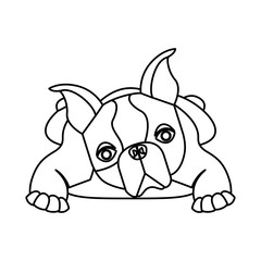 cute french bulldog icon vector illustration design