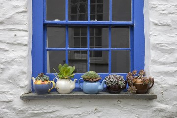 Pretty cottage window with teapots and plants, Port Isaac, Cornwall, England