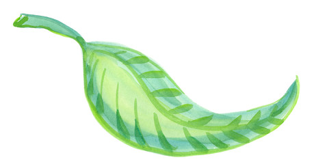 Single abstract curved green leaf painted in watercolor on clean white background
