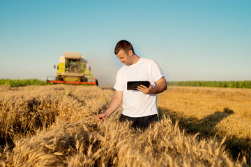Farmer at wheat field checking online internet progress.