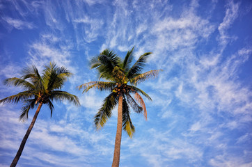 Palm with blue sky and clound